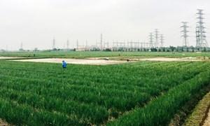 Phát triển sản xuất nông nghiệp chuyên canh tập trung ở tỉnh Hải Dương