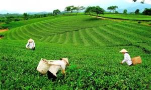 Giải pháp phát triển kinh tế nông nghiệptỉnh Thái Nguyên