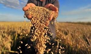 Tổng cục Dự trữ Nhà nước yêu cầu đẩy nhanh mua lương thực  dự trữ quốc gia năm 2021