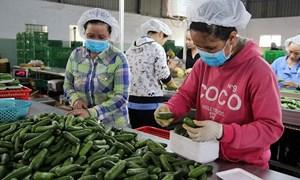 Hiến kế tiêu thụ nông sản trước ảnh hưởng của dịch Covid-19
