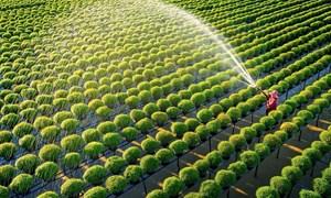 Để thị trường bất động sản nông nghiệp của Việt Nam phát triển bền vững
