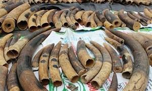 7 tấn ngà voi và vẩy tê tê vô chủ tại cảng Nam Hải Đình Vũ, Hải Phòng