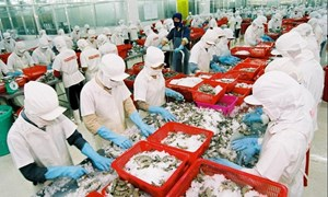 Kỳ vọng tăng xuất khẩu thủy sản sang EU nhờ EVFTA