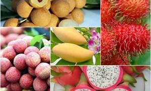 Thúc đẩy xuất khẩu rau quả Việt Nam sang thị trường EU: Nhìn từ quy định SPS