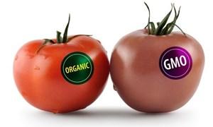 Người dùng nên lưu ý gì khi sử dụng thực phẩm biến đổi gen?