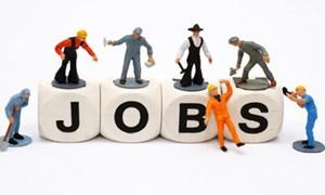 Bảo hiểm thất nghiệp mở rộng vững chắc diện bao phủ