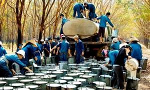 Nâng cao năng lực cạnh tranh của sản phẩm cao su Việt Nam