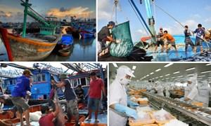 """Gỡ cảnh báo """"thẻ vàng"""" của EC, bảo vệ uy tín ngành Thủy sản Việt Nam"""