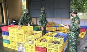 Xử lý nghiêm trường hợp buôn bán, vận chuyện trái phép gia cầm giống qua biên giới vào Việt Nam