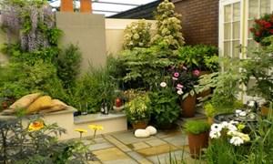 Cách tạo không gian xanh cho ngôi nhà phù hợp với từng vị trí