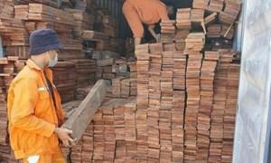 Hải quan Hải Phòng: Bắt lượng lớn gỗ quý nhập lậu