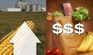 FAO: Chỉ số giá lương thực tiếp tục tăng, nguồn cung ngũ cốc dồi dào