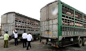 Ngăn chặn nhập lậu gia súc, sản phẩm động vật qua các cửa khẩu biên giới