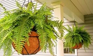 Nếu nghĩ trồng cây trong nhà có thể lọc sạch không khí, bạn đã sai