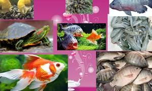 Kiểm soát loài ngoại lai xâm hại ảnh hưởng tiêu cực tới môi trường tại Việt Nam