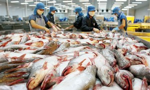 Cần công khai hơn 800 sản phẩm vật tư thủy sản lưu hành trái phép