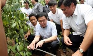 Triển khai chính sách bảo hiểm với các sản phẩm nông nghiệp chủ lực