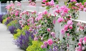 Thay thế sáng tạo cho các chậu hoa trong nhà