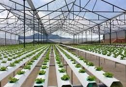 Thu hút doanh nghiệp vào nông nghiệp: Còn nan giải!