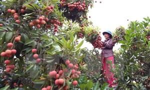 Việt Nam chủ yếu xuất khẩu mặt hàng gì sang Trung Quốc?