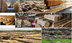 Chính sách hỗ trợ ngành chế biến xuất khẩu gỗ phát triển