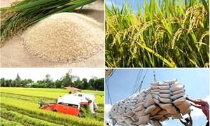 22 doanh nghiệp Việt Nam được xuất khẩu gạo sang Trung Quốc