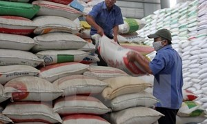Hơn 10 nghìn tấn gạo sẽ đến với 12 tỉnh trong dịp Tết Nguyên đán