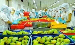 Xuất khẩu rau quả: Hiện thực hóa tiềm năng