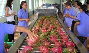 Năm 2017: Dự báo xuất khẩu rau quả đạt hơn 3 tỷ USD