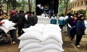 Cấp hơn 35.600 tấn gạo hỗ trợ cho học sinh tại 47 tỉnh thành