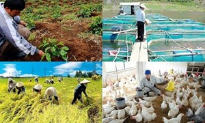 Hoàn thiện hồ sơ xây dựng Nghị định về bảo hiểm nông nghiệp