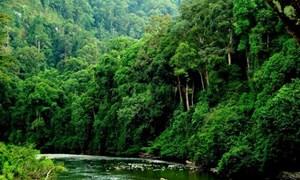 WB tài trợ 300 triệu USD giúp Việt Nam tăng kết nối giao thông và bảo vệ rừng
