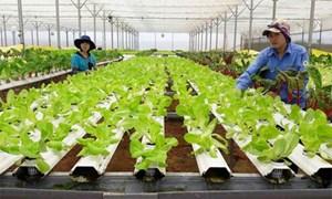 Làm nông nghiệp 4.0: Hãy bắt đầu từ khả năng tiếp thu công nghệ