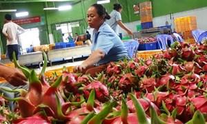 Xuất khẩu rau, quả - Lực đẩy từ thị trường khó tính