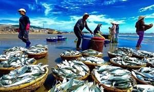 """EU sang Việt Nam kiểm tra việc khắc phục """"thẻ vàng"""""""