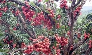 Vào mùa trái cây giá rẻ