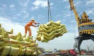 3 điều kiện mới về kinh doanh xuất khẩu gạo