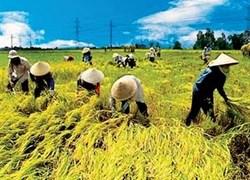 Hợp tác xã nông nghiệp làm dịch vụ: Lợi ích kinh tế là chất kết dính