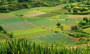 Chính sách hỗ trợ để bảo vệ và phát triển đất trồng lúa