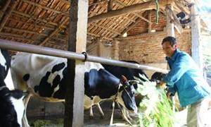Bảo hiểm nông nghiệp: Làm đến đâu chắc đến đó!