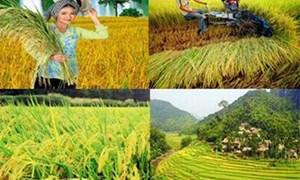Để ngành Nông nghiệp Việt Nam phát triển như kỳ vọng