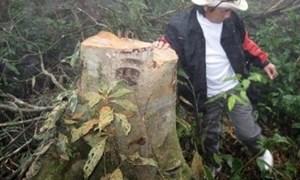Hà Tĩnh: Bất thường trong đấu giá rừng tiền tỷ?