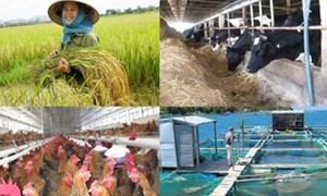 Hỗ trợ phí bảo hiểm cho hộ nông dân, cá nhân cận nghèo tham gia thí điểm bảo hiểm nông nghiệp