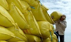 Thu mua toàn bộ lúa gạo tạm trữ cho nông dân: Vẫn phải kết nối qua thương lái