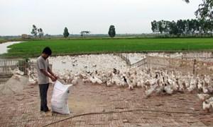 Vốn tín dụng chính sách xã hội: Tiếp sức cho nông dân xóa đói, giảm nghèo