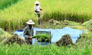 Phải ưu tiên cho nông nghiệp và xuất khẩu