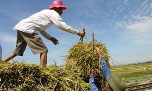Thực trạng đầu tư công cho tam nông