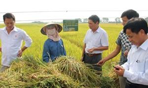 Ưu đãi và hỗ trợ khi tham gia xây dựng hạ tầng dự án cánh đồng lớn