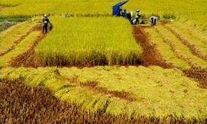 Kinh tế gặp nguy nếu nông nghiệp khủng hoảng