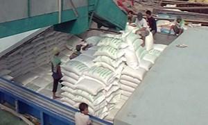 Việt Nam trúng thầu xuất 500.000 tấn gạo sang Philippines